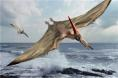 Pterodactyl in Flight