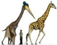 Pterodactyl and Giraffe